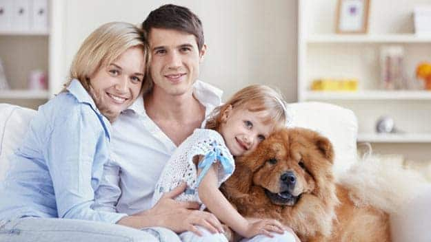 Wills & Trusts dog-young-family Direct Wills Ravensthorpe